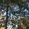 Image for FIRENZE, VIALE MAZZINI